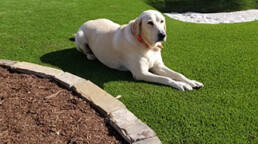 Synthetic pet grass